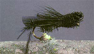 Black Grass Hopper
