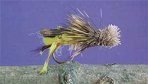 Yellow Grass Hopper