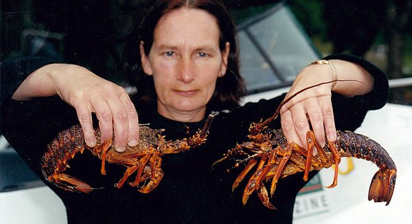 Most of the crays taken along the Kaikoura coast are just above the legal size like these.