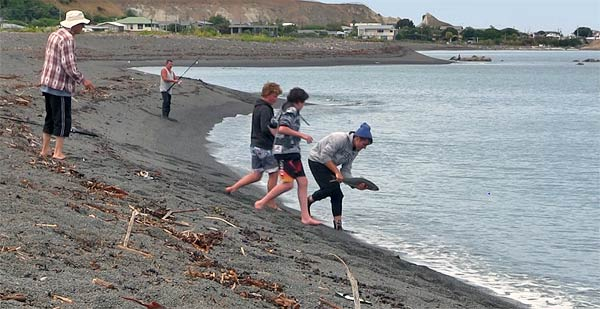 Boys releasing kahawai at Kaikoura's South Bay. Kahawai are very plentiful during the summer months, but can also be caught all year at Kaikoura.