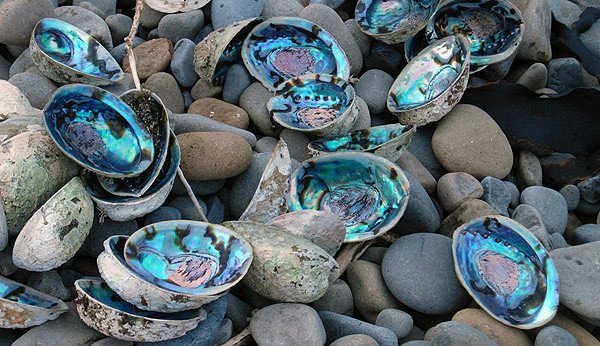 Paua shells on the beach at Half Moon Bay.