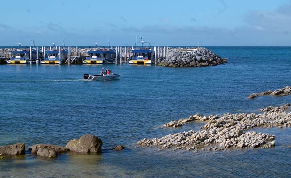 Whale Watch vessels behind sea wall at South Bay, Kaikoura.