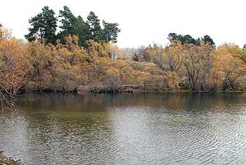 At the southern end of the lake near the camping ground trees overhang the water to provide plenty of cover for trout.