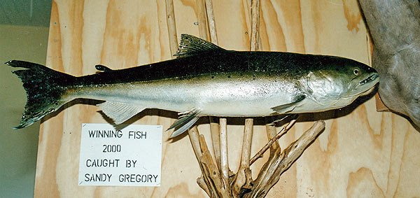 This is a fiberglass replica of the winning fish from the 2000 salmon competition.