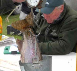 This fat rainbow trout has tipped the scales at 2.1kg.