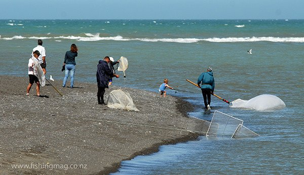 Whitebaiting at the mouth of the Wairau River Diversion. The young angler in the center of the picture only had the bottom section of his rod, and no line, but even though wearing nappies, still continued fishing anyway!