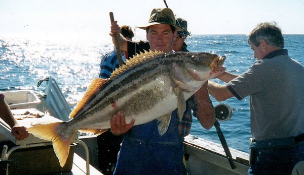 This is a very big trumpeter caught off the Canterbury Coast.