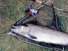 Lake Selfe brown trout. This is about as big as the fish get in Lake Selfe?