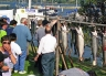 Otago Harbour Salmon Fishing Competition.