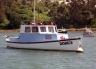 Launch Otago Harbour