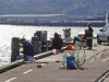 Otago Harbour drop-net for salmon