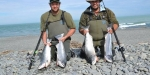 "A ""red letter"" salmon fishing day at the mouth of the Rakaia River."