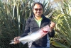 Salmon caught at McIntosh's Rocks, Waimakariri River, on a zed spinner that was black on one side and silver on the other. The fish weighed 6lb 8oz. Caught 9 February 2017.