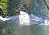 Waimakariri River - Releasing a foul hooked fish.