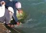Releasing a foul hooked salmon in the Waimakariri River.