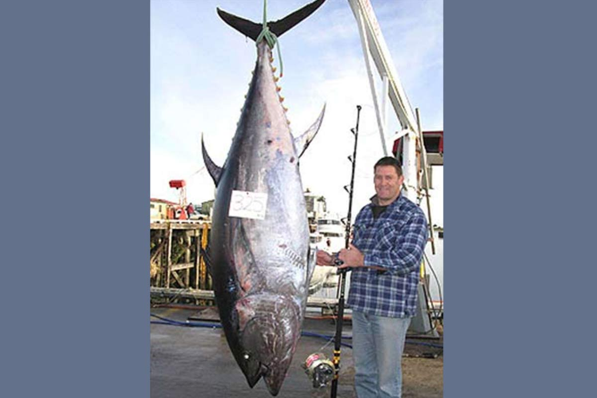 Local West Coast angler Steve McCowan with his record 325kg Pacific blue tuna. Photograph reproduced courtesy of Lisa Davidson and Westport News.
