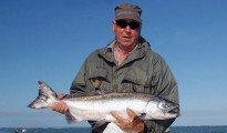 Large Quinnat salmon caught at the mouth of Canterbury's Waimakariri River. Note the bright silver colour when the salmon are fresh from the sea.
