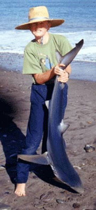 This small blue shark was taken surfcasting at Gentle Annie Beach on the South Island's West Coast.