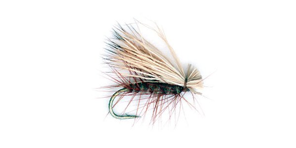Elk hair caddis featured