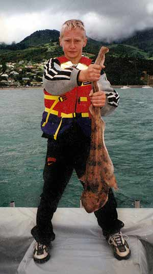 This brightly coloured carpet shark was caught in Akaroa Harbour.