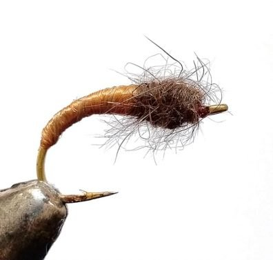 The horn cased caddis nymph is simple to tie but is a deadly fish taker.