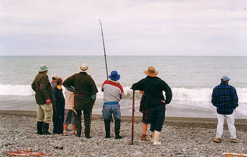 Sevengill sharks. Playing a large sevengill shark in the surf on the south side of the Rangitata Rivermouth. A crowd of curious onlookers waits in expectation of seeing a huge fish being landed. Often the the shark cuts through the line, either with its teeth or by rolling on it, and escapes after a long fight without the angler (or the onlookers) even getting a glimpse of the monster fish!