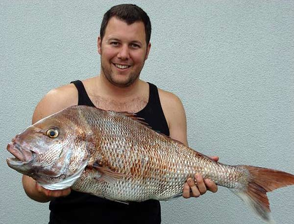 Lloyd looks pleased with this big 'Ol Man snapper taken off Raglan, North Island, West Coast of New Zealand.