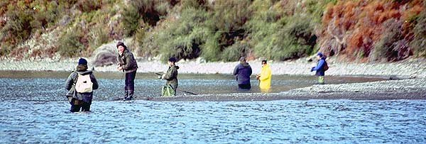 You certainly don't need a boat to fish successfully at Lake Coleridge. These anglers are spin fishing at the Picket Fence at the head of the lake on the western side. Generally the best spinning lures are those that sink reasonably quickly such as ticers in black and green or yellow strips weighing up to 20g, or Tassie Devils and Tillins Cobras in green and gold colours. It is important to cast out then wait up to 30 seconds for your lure to sink down before you start slow winding. If you cast straight out then start winding flat-out as soon as your lure hits the water you will be very lucky to catch a fish. The deep diving Dual Depth 20g Tasmanian Devils are the best lures to try. These dive down to over 3m and the extra weight is good for casting distance as well.