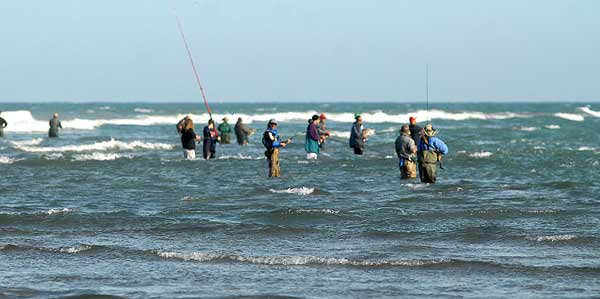 Kahawai anglers at the Waimakariri River mouth. There must be more yellowtail kingfish out there somewhere! A few Canterbury anglers are now targeting them at this location.