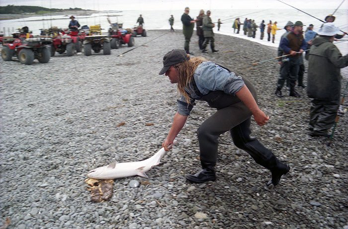 Sliding a big salmon up the shingle beach by the tail at the Rangitata River mouth.
