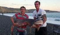 Sevengill shark caught by Lewis Garton at Birdlings Flat.