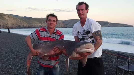 Sevengill shark caught by Lewis Garton at Birdlings Flat.