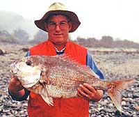 Snapper are the premier table fish in New Zealand. They are caught only in the warmer waters of the North Island and upper South Island.