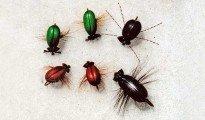 Float foam beetles