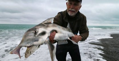 Malcolm Bell from The Complete Angler in Christchurch caught this beaut elephant fish surfcasting at Birdlings Flat December 2016.