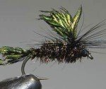 Love's Lure. 1. Tie in the tail first and then the wings. Hook size 10 - 14 turned down eye. 2. Tie in the body of peacock herl. 3. Tie in black cock hackle. 4. Finish by tying-off and apply a drop of head cement.