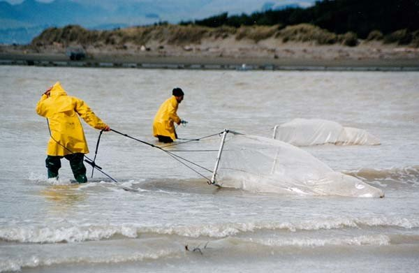 Whitebaiters drag netting for bait at the mouth of Canterbury's Waimakariri River. How to Catch Whitebait.