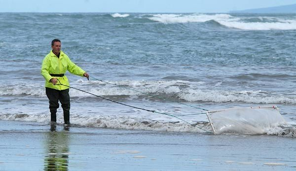 Drag netting at the Waimakariri River mouth. This method of whaitebaiting is popular at this river mouth because of the shallow sandy bottom.