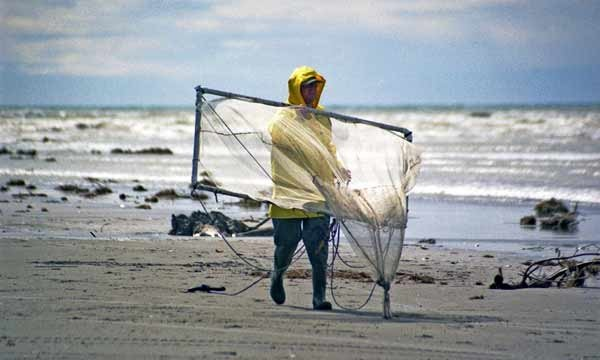 Drag net, Waimakariri River. How to Catch Whitebait.