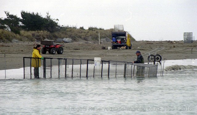 In this photograph taken from my boat at the mouth of the Waimakariri River you can see a set of gobys (screens) in action as the guide the whitebait towards the waiting box net.