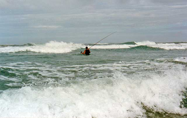 Photo of many standing in waist deep water about to cast his line on Ninety Mile Beach, Northland, New Zealand.