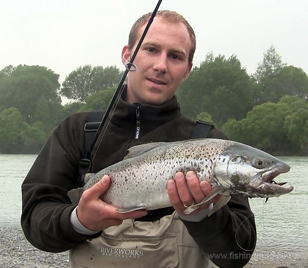 Waimakariri River trout and salmon. Big hard fighting sea-run brown trout taken near the bridges on the Waimakariri River.