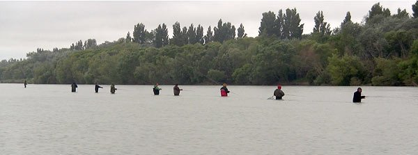 Anglers fishing for sea-run brown trout near the bridges on the Waimakariri River.