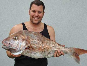 New Zealand fishing. Snapper.