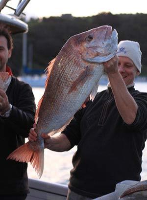 Snapper 9.6kg (21.12lbs). Waiheke Island Snapper.
