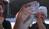 Waiheke Island Snapper. Snapper 9.6kg (21.12lbs).