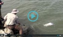 Salmon Fishing in the Lower Waimakariri River Video - featured image