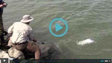 Salmon Fishing in the Lower Waimakariri River Video - featured image