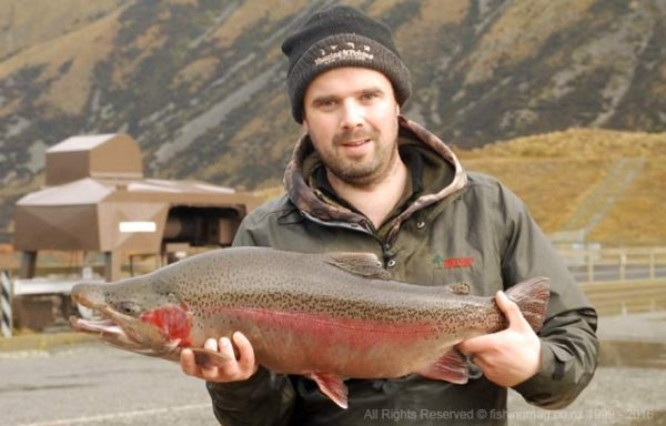A handsome rainbow jack trout weighing over 12 lbs taken in the Ohau A Canal, Mackenzie Country.