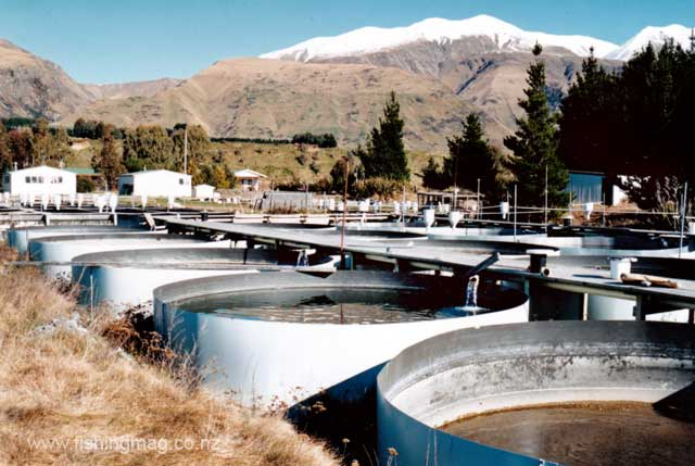 Tanks at the old Glenariffe Salmon Research Station. Photograph Allan Burgess.